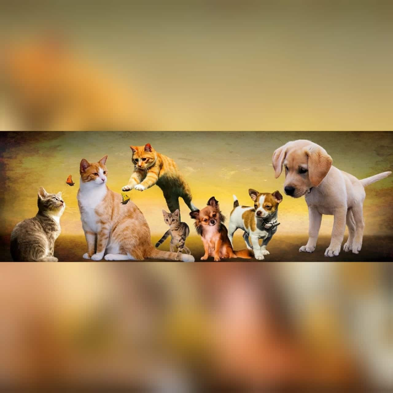 Are you seeing Dogs and cats in your dreams? want to know, what does it mean? #AtoZChallenge