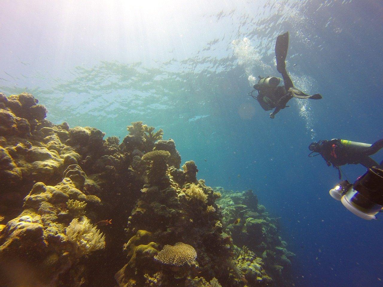 reef-1148995_1280